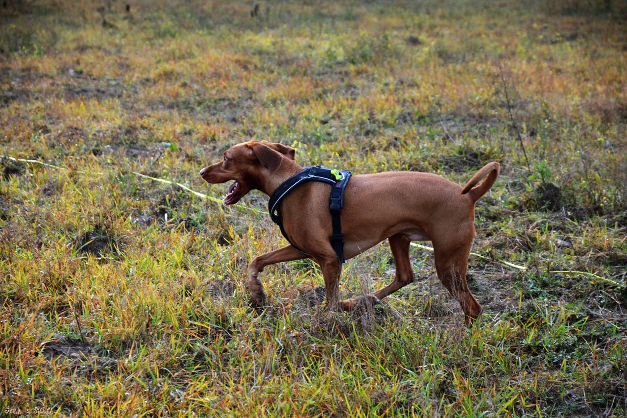 Spacery z psem – nasze małe sukcesy