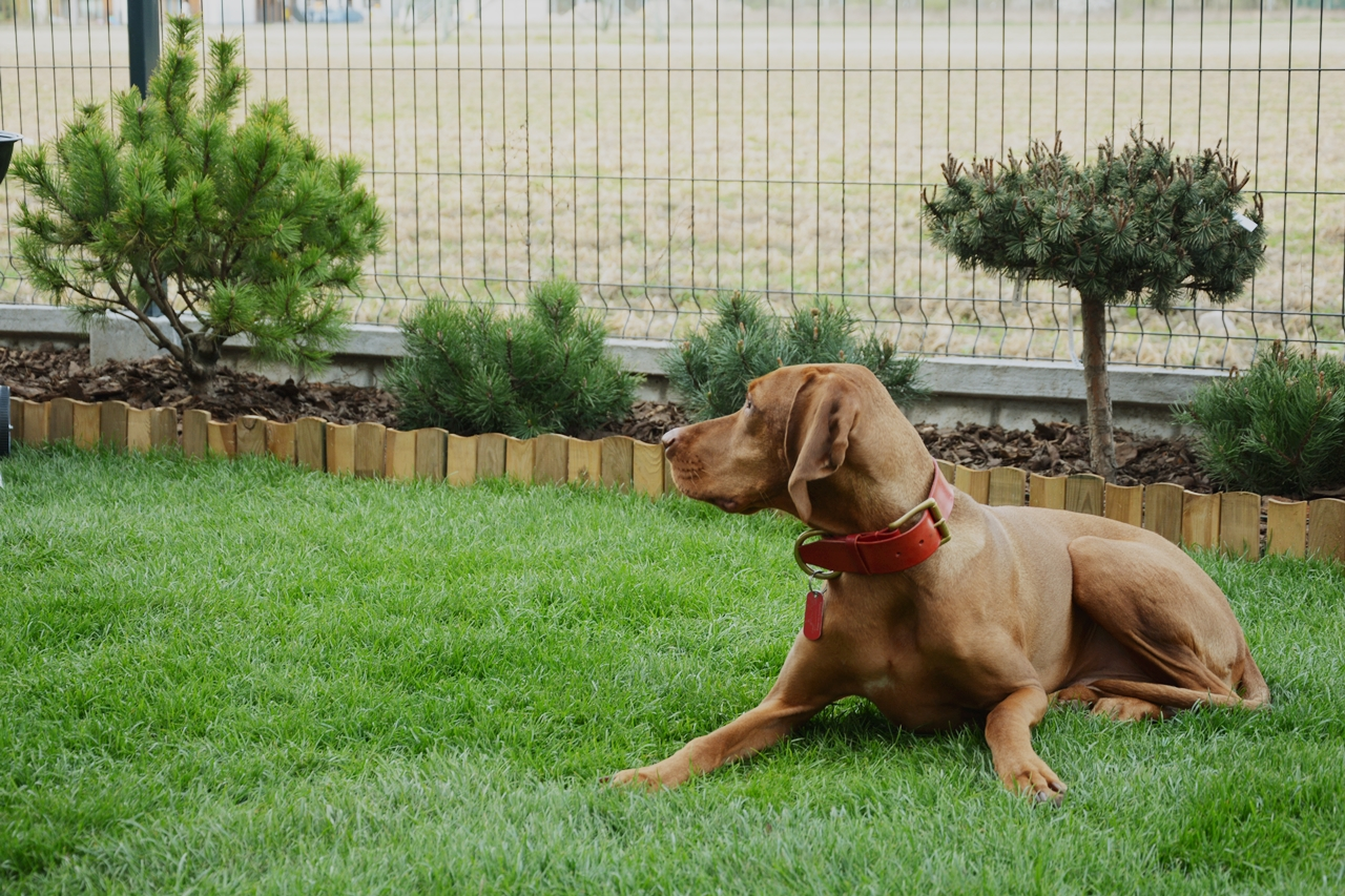 Pies w ogródku